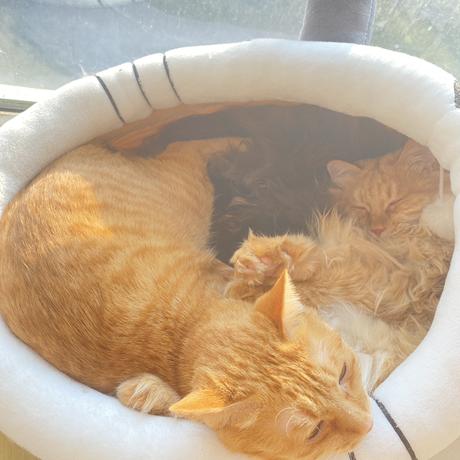 程序员和他的猫于2020-10-14 15:14发布的图片