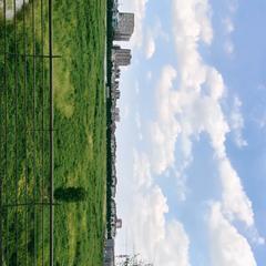 xlu1997于2020-10-06 12:38发布的图片